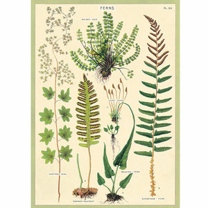Ferns Wrapping Paper / Poster