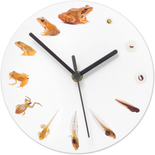 Frog Life Cycle Clock