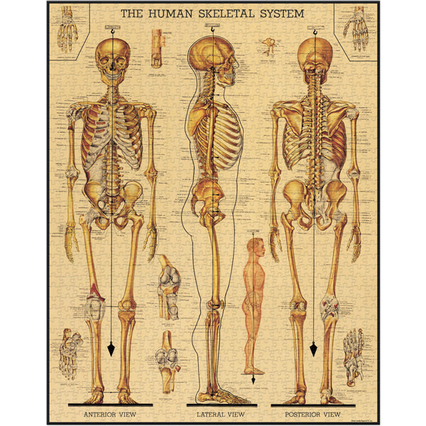 Skeleton 1000 Piece Jigsaw Puzzle