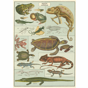 Reptiles and Amphibians Wrapping Paper / Poster