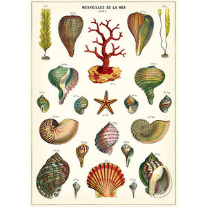 Sea Life Wrapping Paper / Poster