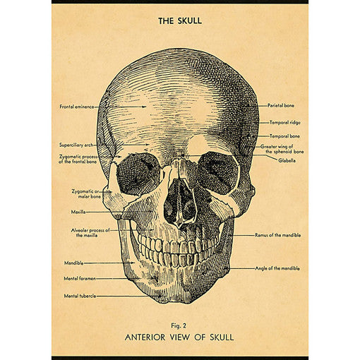 Skull Diagram Wrapping Paper / Poster