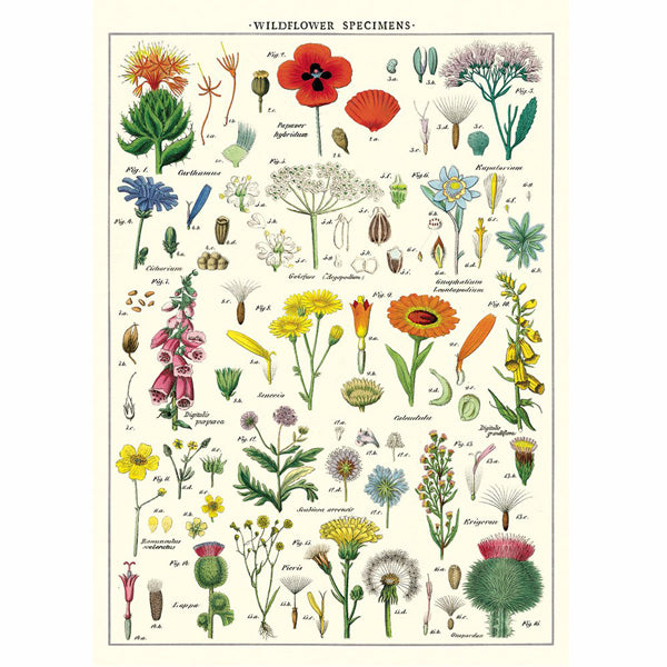 Wildflower specimens wrapping paper poster present indicative wildflower specimens wrapping paper poster mightylinksfo