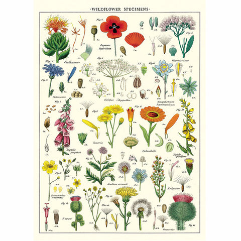 Wrapping paper present indicative wildflower specimens wrapping paper poster mightylinksfo
