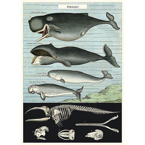 Whale Chart Wrapping Paper / Poster