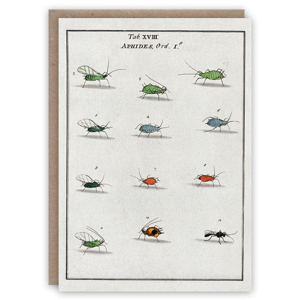 Aphids Card