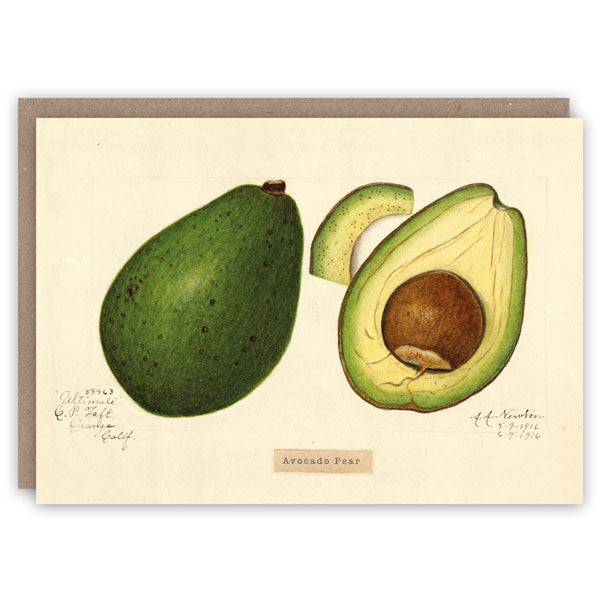 Avocado Card