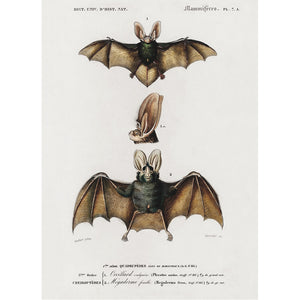 Bat Tea Towel
