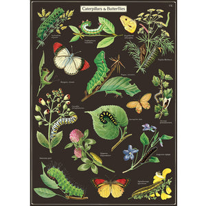 Caterpillars & Butterflies Wrapping Paper / Poster