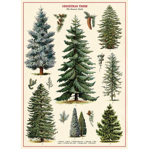 Christmas Trees Wrapping Paper / Poster