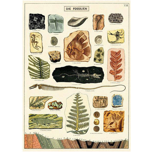 Fossils Wrapping Paper / Poster