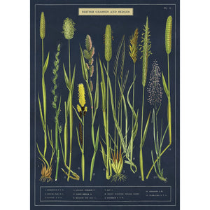 Grasses and Sedges Wrapping Paper / Poster