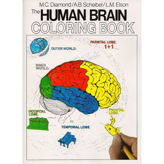 Human Brain Colouring Book