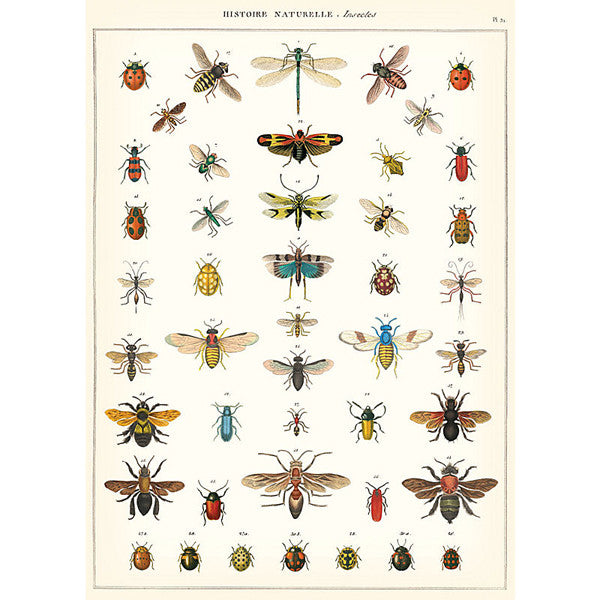 Natural History of Insects Wrapping Paper / Poster