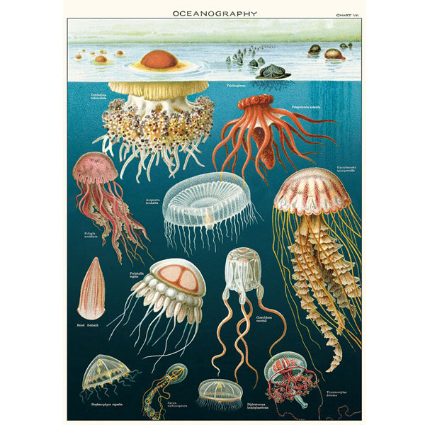 Oceanography Wrapping Paper / Poster