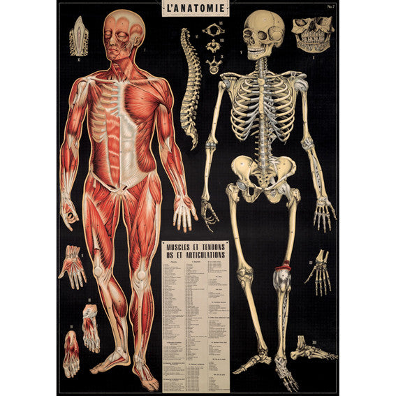 L\'Anatomie Wrapping Paper / Poster - Present Indicative