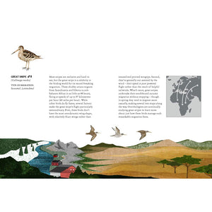 Migration: Exploring the Remarkable Journeys of Birds
