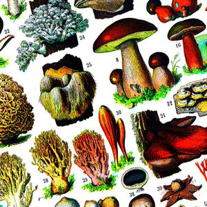 Mushrooms 1000-piece Jigsaw Puzzle