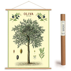 Olive Tree Wrapping Paper / Poster