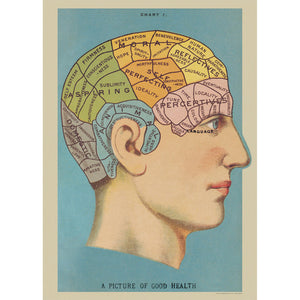 Phrenology Wrapping Paper / Poster