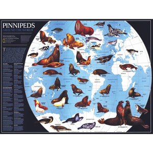 Pinnipeds 1000 piece Jigsaw Puzzle