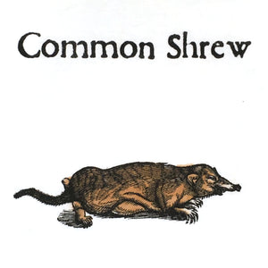 Common Shrew Women's T-shirt - Fitted
