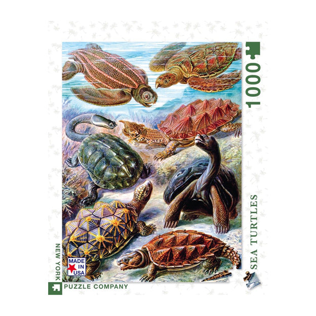Haeckel's Turtles Puzzle