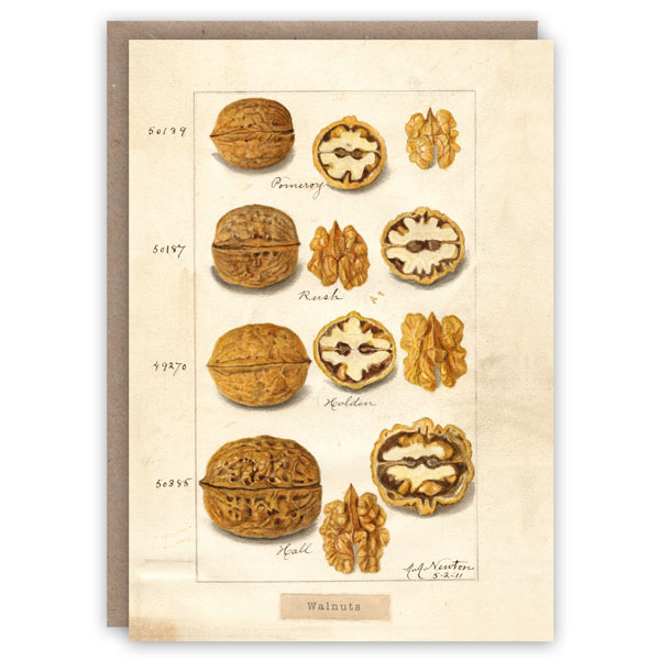 Walnuts Card