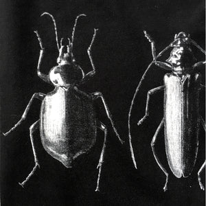 With The Coleoptera Women's T-shirt - Fitted