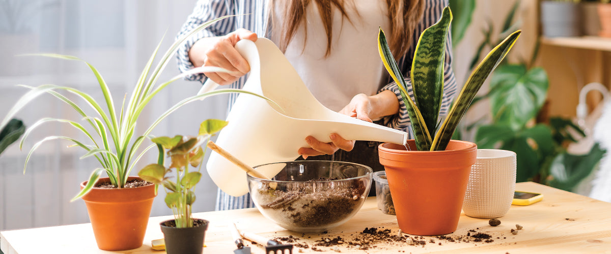 Plants That Clean the Air in Your Home Better Than an Expensive Air Purifier