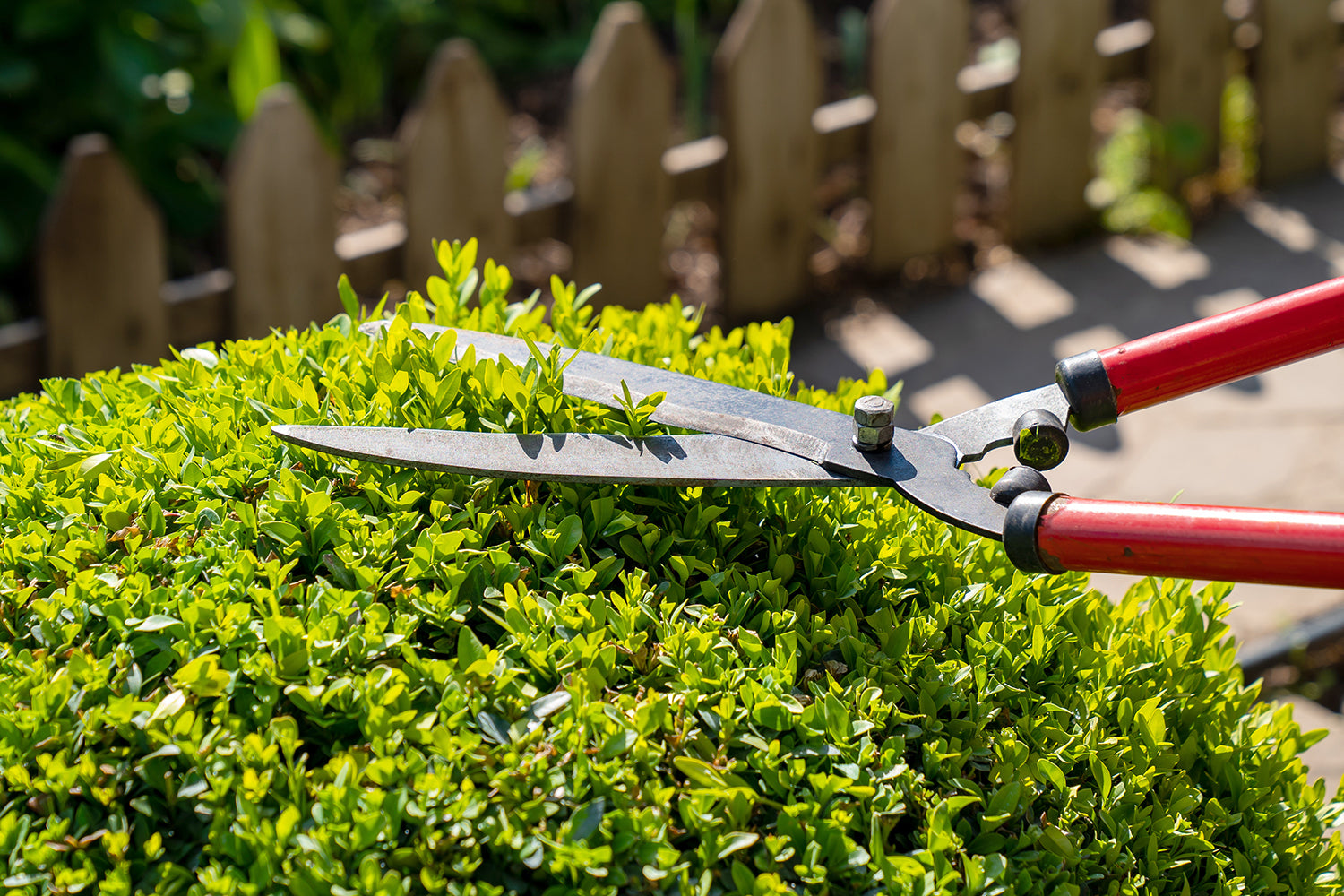 When It Comes To Pruning, Timing Is Everything!