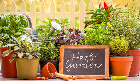 Herbs for health: 13 easy-to-grow all-stars from your garden