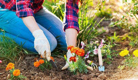 Spring planting essentials — top 7 gardening tasks to do right now