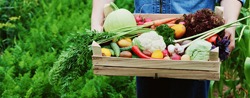5 Questions to ask before joining a food co-op