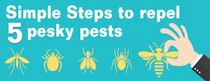Simple steps to repel 5 pesky pests