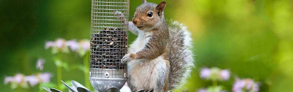Keep Squirrels Out of Your Bird Feeder Permanently!