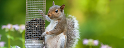 Keep squirrels out of your bird feeder permanently