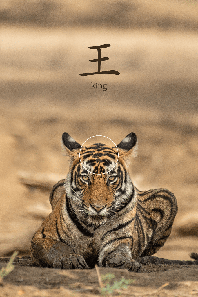 Tiger Eye Tiger King Chinese Character MYKU