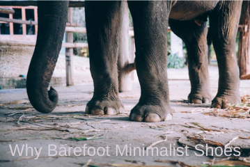 Why Barefoot Minimalist Shoes?
