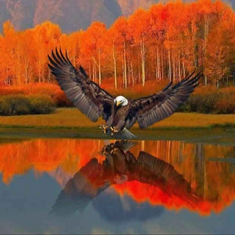 Eagle in Fall