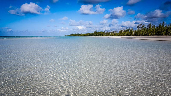 Bahamas bonefish fly fishing