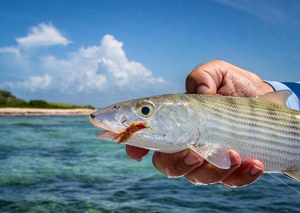 Fish-Skull Shrimp & Cray Tail fly bahamas bonefish