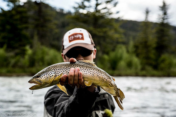 Madison River brown trout caught in a soft water pocket on an articulating style fly, photo by Charlie Gordon
