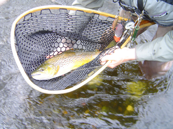 fly fishing trout maine