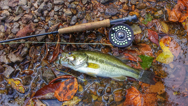 small water fly fishing: streamer design and tactics. – flymen, Fly Fishing Bait