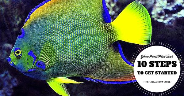 Your First Fish Tank - 10 Steps to Get Started