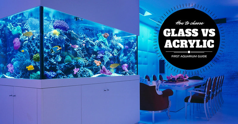 How to choose your first aquarium: Glass vs Acrylic