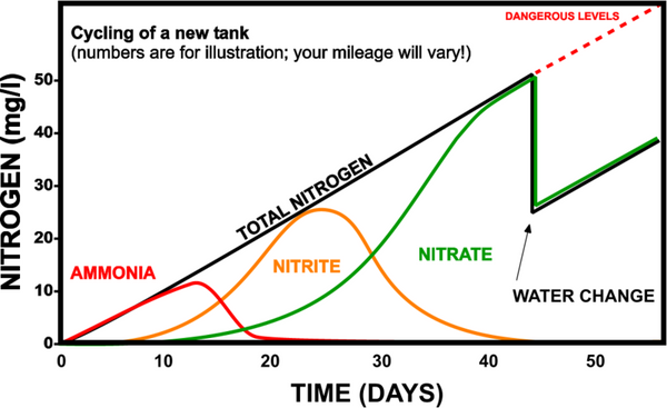 What does it mean to cycle your tank dream fish tanks new aquarium cycling diagram ccuart Choice Image