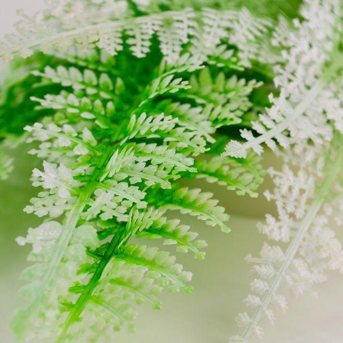 biOrb Winter Fern Aquarium Plant Pack - Set of 2 (46066)