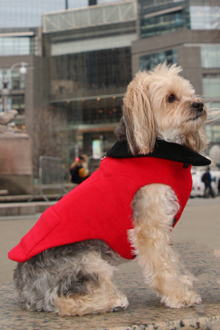 urban dog in columbus circle nyc